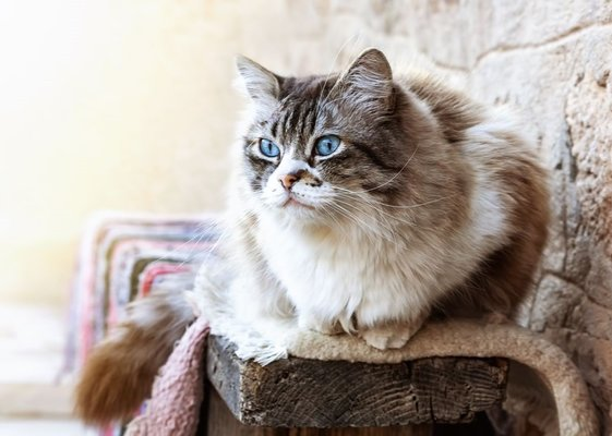 Nazlı Bebek: Tiffanie Kedisi